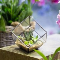 Polyhedron geometric clear glass plant Box
